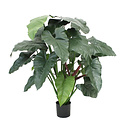 Philodendron XL Groen H120