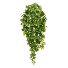 Scindapsus Hanging Plant