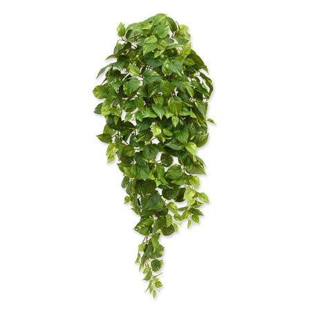 Scindapsus Hangplant