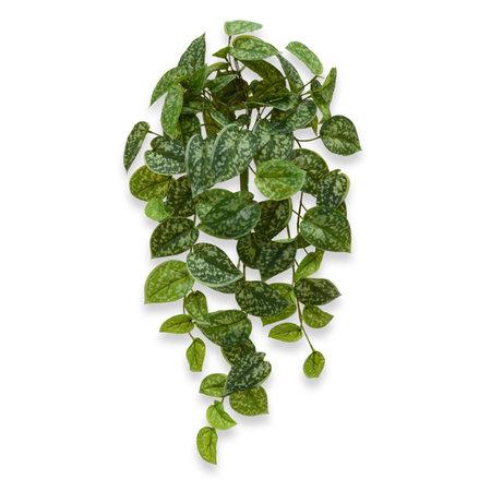 Scindapsus Pictus Hangplant