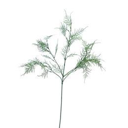 Asparagus Tak