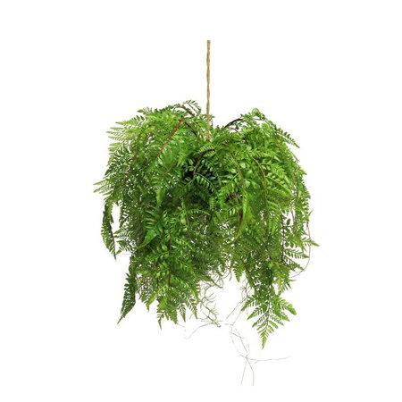 Fern Hanging plant