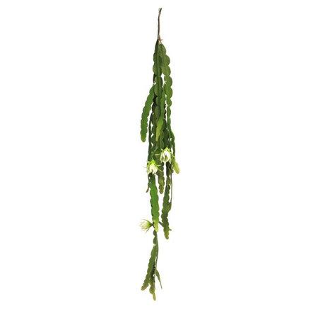 Cactus Hanging Plant