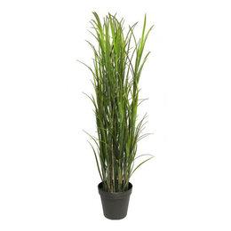 Lignac Gras UV