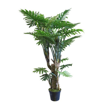 Philodendron Wasimbu Plant