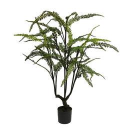 Fern tree in pot