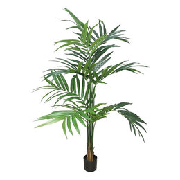 Kentia Palm Alton