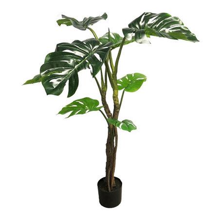 Monstera Jane Plant
