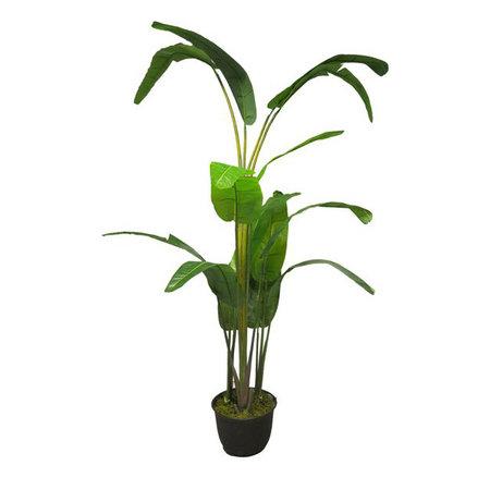 Heliconia Rostrata Plant