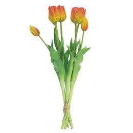 Tulp Bundel