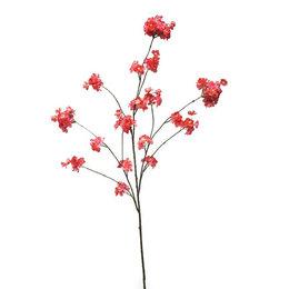 Prunus Tak