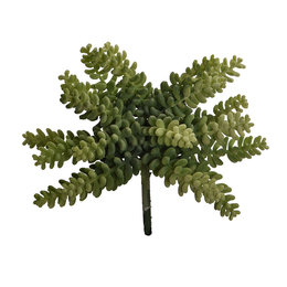 Succulent Steker