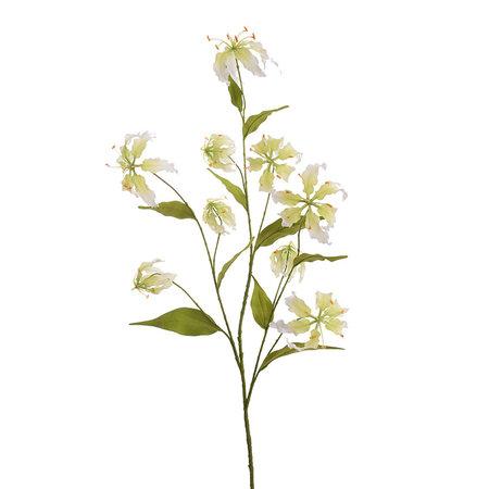 Gloriosa branch