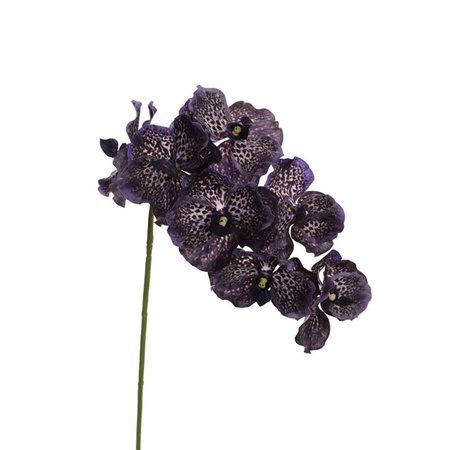 Vanda Orchidee Tak