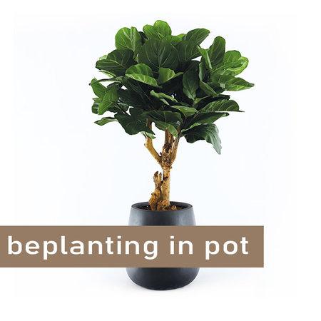 Beplanting in pot