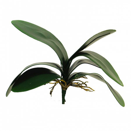 Orchidee blad (x7)