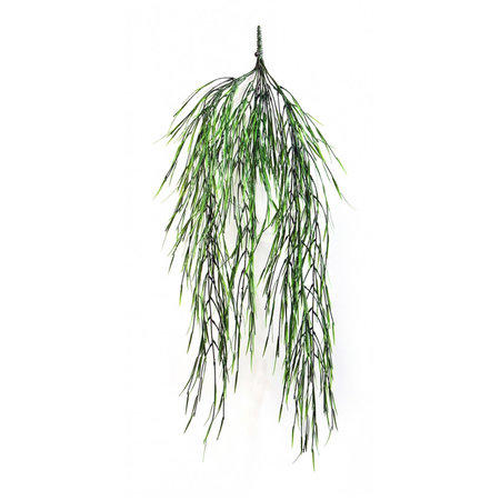 Willow Hanging Plant