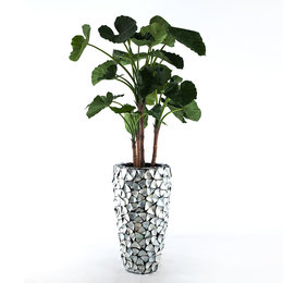 Isa filled with alocasia