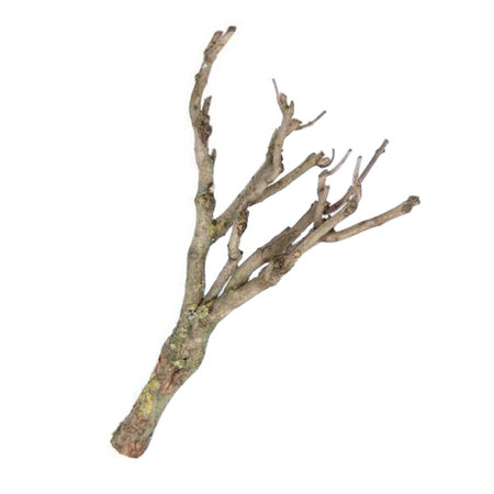 Drying branches