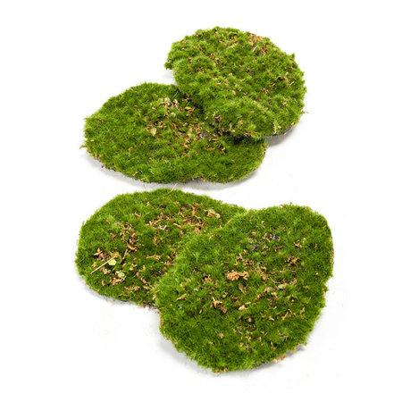 Moss Plate Green