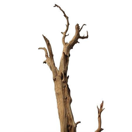 Ghostwood Natural H120