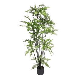 Varenboom in pot