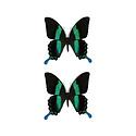 Stolp met 2 Papilio Blumei