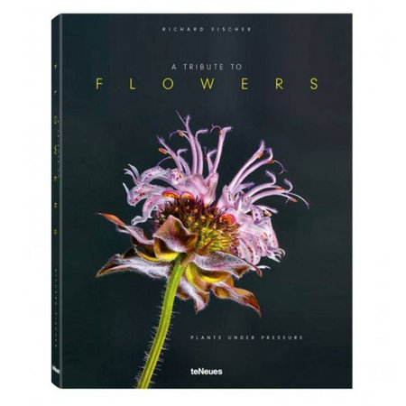 Boek A Tribute to Flowers