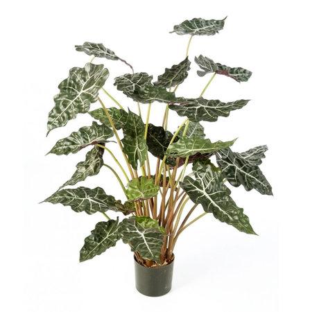 Alocasia Plant Groen