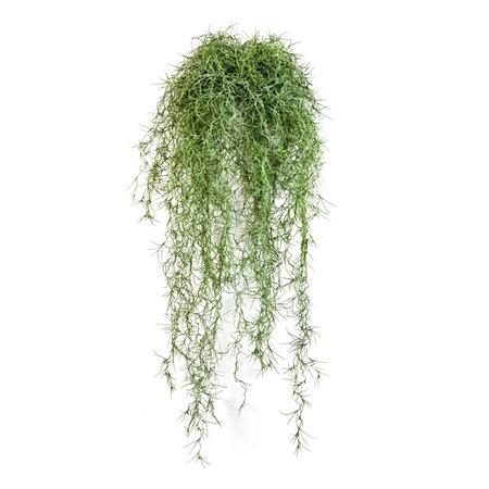 Long Hair Steker Groen H80
