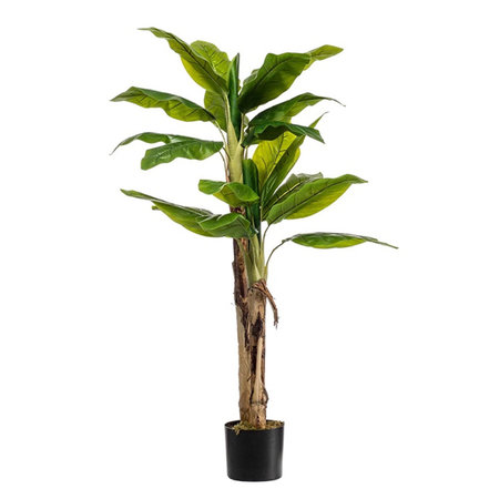 Bananenboom Groen H140/21 blad