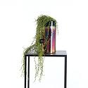Erwtenplant in pot Groen H70