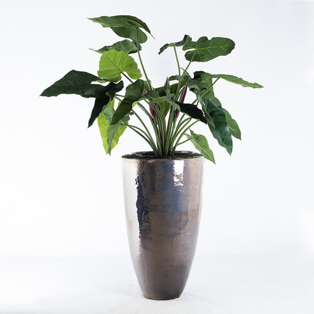 Philodendron XL