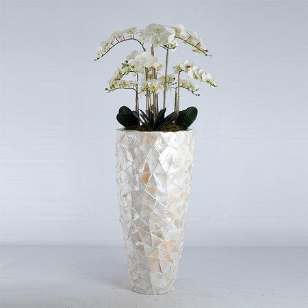 Bora Orchidee tak