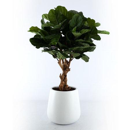 Pot Pax