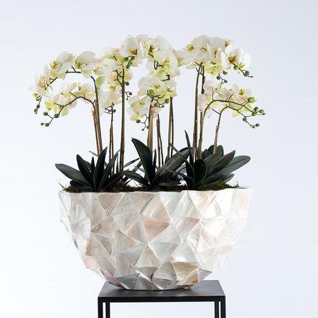 Bora Orchid branch