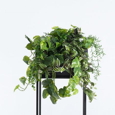 Senecio hanging bush Groen H70