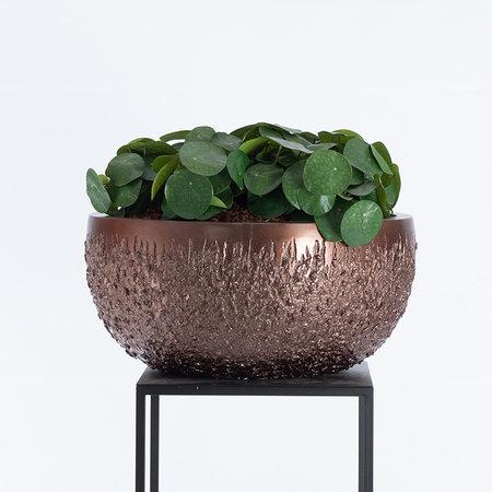 Bowl Asphalt