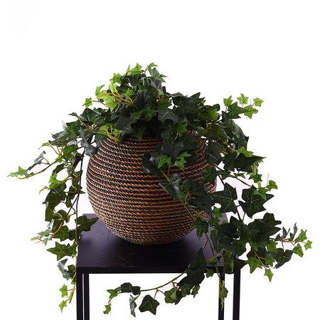 Hedera Hanging plant UV