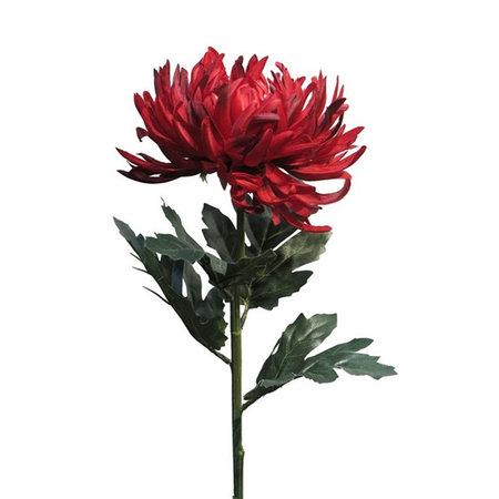 Chrysanthumum Tak Rood H63