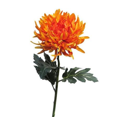 Chrysanthemum branch