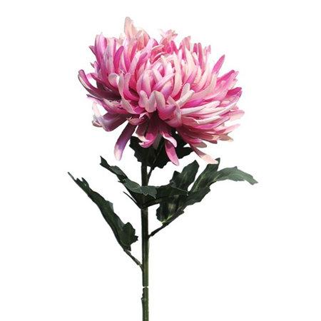 Chrysanthumum Tak Roze H63