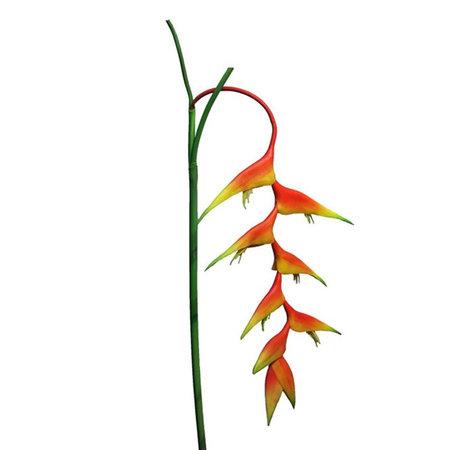 Heliconia Caribea branch