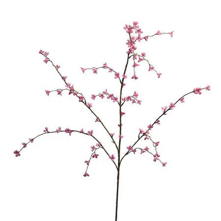 Cross Plum branch