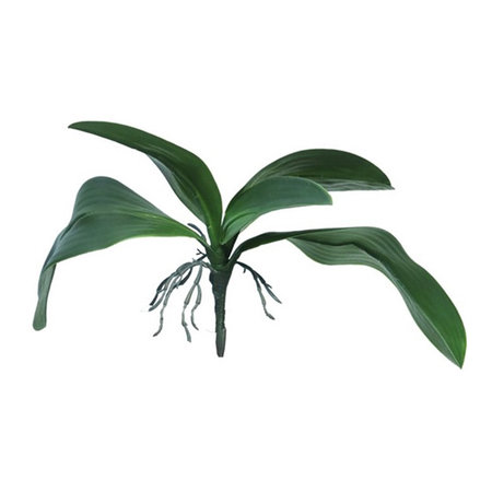 Orchid leaf with roots