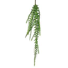 Hanging plant Epiphyllum