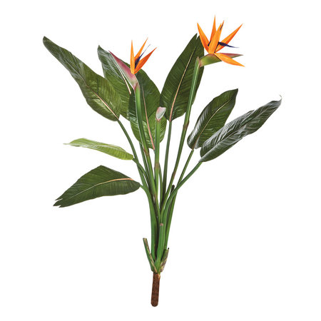 Strelitzia Steker Oranje H100