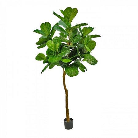 Ficus Lyrata Groen H170