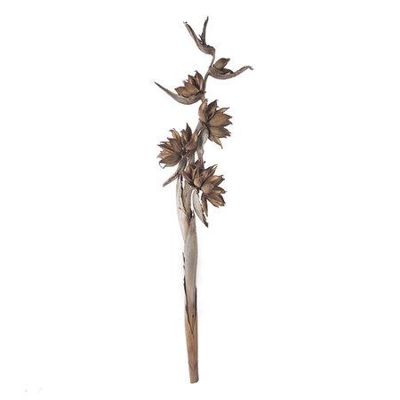 Sororoca branch
