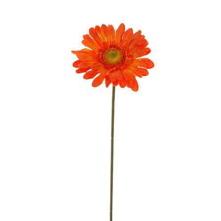 Gerbera tak Oranje